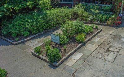 10 Reasons to Create an Urban Garden